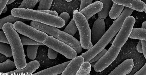 UK sprouts firm rejects French E.coli claims