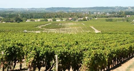 White wine sold for world record price