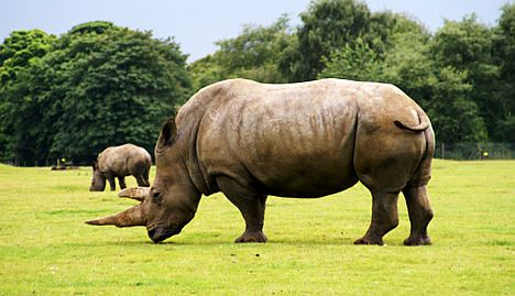 French zoo steps up rhino surveillance against poachers