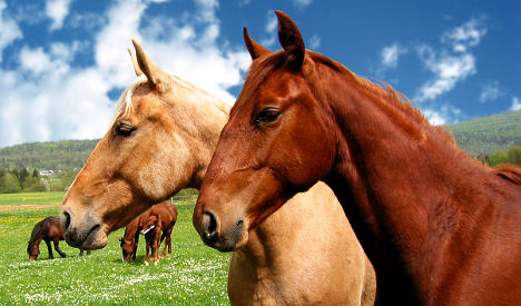 Why Brits are crazy to say 'neigh' to horsemeat