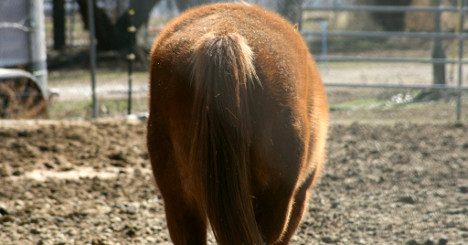 French pensioner faces jail over sex with horse