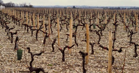 Bordeaux vineyards to dry up by 2050: study