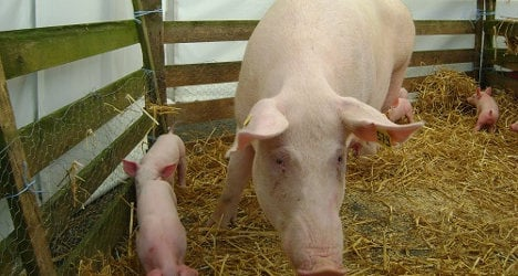 French pig farmers put the block on foreign pork