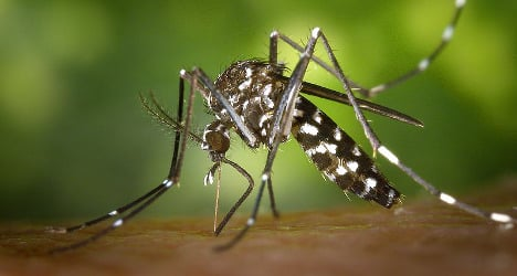 France declares war on the Tiger mosquito