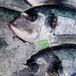 French warned over eating too much fish