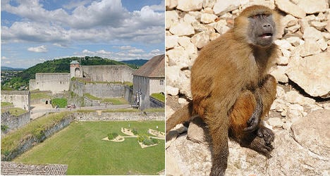 French UNESCO site evicts baboon vandals