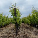 Wine growers call for aid with more storms due