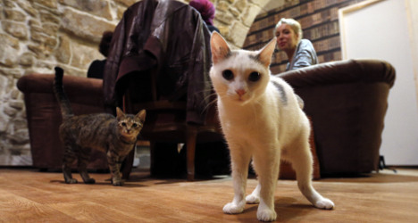 GALLERY: France's first 'cat café' opens in Paris