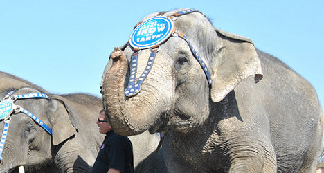Pensioner killed by runaway circus elephant