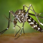 <strong>Tiger mosquito.</strong> These disease-carrying pests have doubled their numbers in France since 2012 alone, according to the Ministry of Health. Especially virulent along the humid Mediterranean coast, the tiger mosquito first appeared in the Alpes-Maritimes department in 2004 and since then, the insects have spread from there and caused serious infections over the years.Photo: CDC/flickr