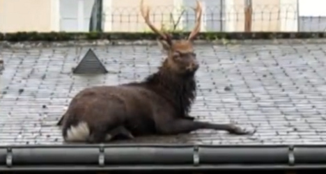 Rudolph arrives early in one sleepy French town