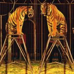Circus animals stranded in French visa nightmare