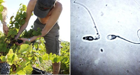 Is the wine industry killing off French sperm?