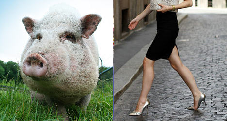 Pigs to UFOs: The most bizarre laws in France