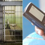 Prisons chief calls for inmates to get mobiles