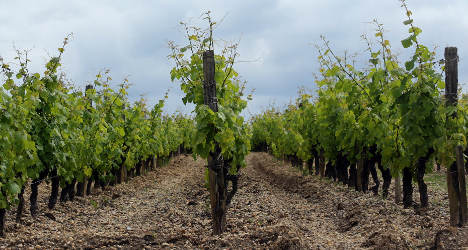 Winemaker faces jail for shunning pesticides