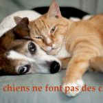 """11. """"Les chiens ne font pas des chats"""" Yes this is France's favourite expression according to the poll. It literally means """"Dogs do not make cats"""". But it actually means """"children do not look like their parents"""". The rest of the answers are: 1. """"Avoir le béguin pour quelqu'un"""" - To have a crush on someone. 2. """"Donner de la confiture aux cochons"""" - To throw pearls to the swines or to give valuable things to ungrateful people. 3. """"Mettre du buerre dans les épinards"""" - to earn a little bit extraPhoto: <a href=""""http://shutr.bz/N6toSx"""">Shutterstock</a>"""