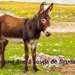 """7.""""Tuer une âne à coups de figues"""" - Literally this means something along the lines of """"To kill a donkey by throwing figs at it"""". But in reality it means something very different. French adventurers may have been told they are """"killing donkeys with figs"""" over the years.Photo: <a href=""""http://shutr.bz/1ftZ6EX"""">Shutterstock</a>"""