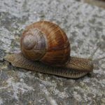 """<b>Escargoter</b> This word made it into the top three. Translating literally as """"to snail"""" this verb means to take your time over something.Photo: Flickr"""