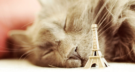 VIDEO: Inside Paris's first luxury hotel for cats