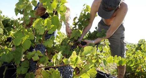 French winegrower fined over pesticide refusal