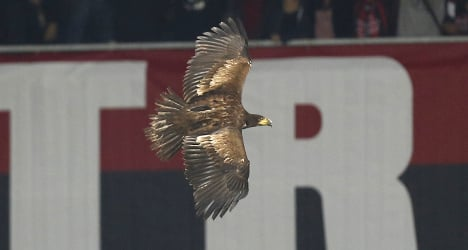 'Dangerous' mascot eagle banned from stadium