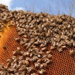 Stung! 25,000 stolen bees tracked down in Brittany
