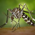 French firm signals 'new era' in malaria fight