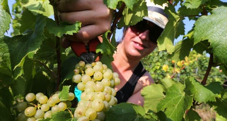 French Indian summer could mean great wine