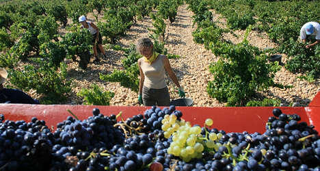 France to regain crown as top wine producer