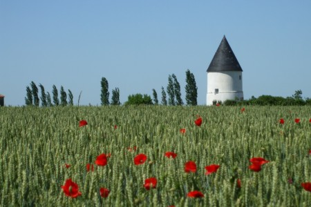 French Property Face-off – An old mill in the Vendée or an old barn in Limousin?