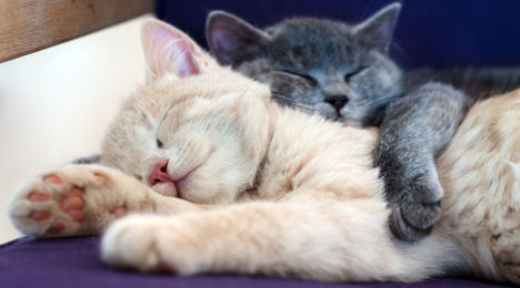 The French just don't do cute cats, says Buzzfeed