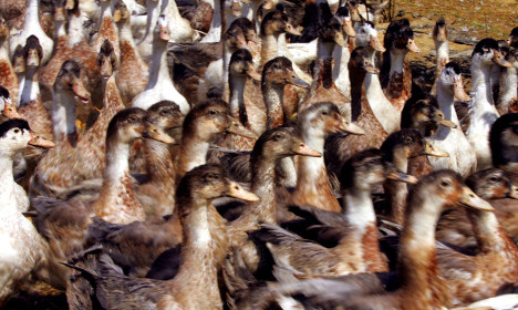 French court clears foie gras producer of cruelty