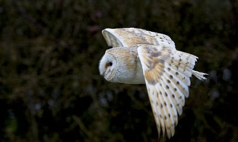 French court acquits 'Harry Potter' owl breeder