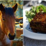Eight charged in France for horsemeat trafficking