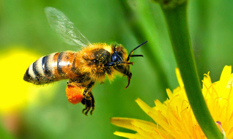 One million bees killed in French road crash