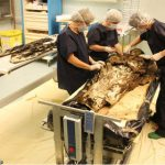 French noblewoman and husband's heart dug up
