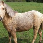 French pensioner freed after 'sex with pony'