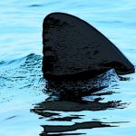 French beach on alert after third shark sighting