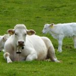 Swiss army nabs French water to give to cows