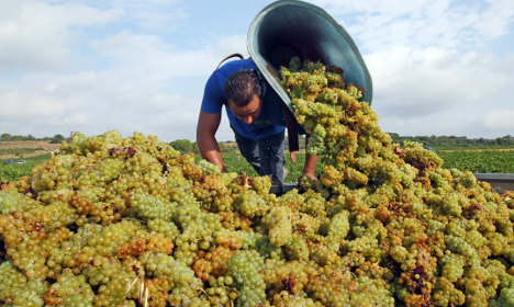 French wine harvest to drop due to lack of rain