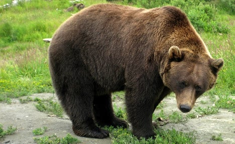 French tourist attacked by brown bear in Russia