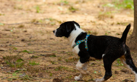 Panic over 'poisoned' pooches in Paris park