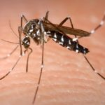 'Deadly' tiger mosquitoes spotted in Paris