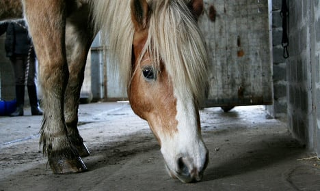 Frenchmen performed sex acts on horses (for 10 months)