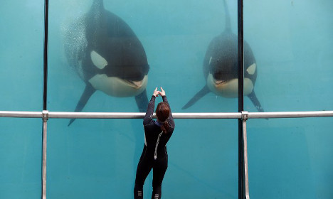 French Riviera's Marineland accused of 'mistreating orcas'