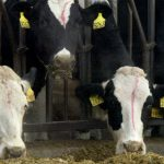France confirms first case of mad cow disease since 2011