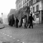 """Errr... """"Ma cherie, I'm just going to take the elephant for a walk."""" In 1941, you could have popped out to get a baguette and come across an elephant. Buy this image by clicking here: <a href=""""http://www.parisenimages.fr/en/collections-gallery/13235-9-elephants-streets-paris-march-1941"""" =""""""""="""""""">www.parisenimages.fr/en</a>"""