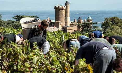 Climate change means French wines face identity crisis