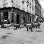 """Ran out of milk? Just pop out and get some from the goat milk seller. At least you could do that inthe first decade of the 20th century in Paris. Buy this image by clicking here: <a href=""""http://www.parisenimages.fr/en/collections-gallery/12126-14-goat-milk-seller-paris-1900-1910"""">www.parisenimages.fr/en</a>"""